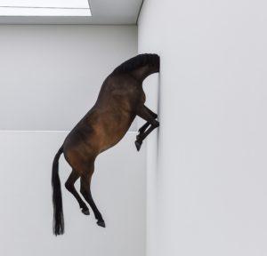 Kunstinstallation Pferd mit Wand