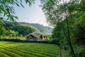 Entwicklung des ländlichen Raums